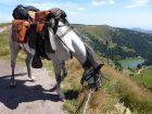 Wanderreiten und Urlaub zu Pferd